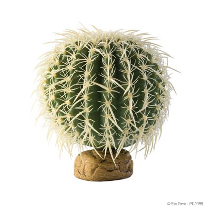 Barrel Cactus large