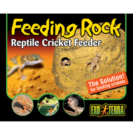 Feeding Rock