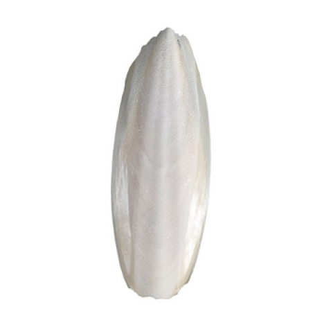 Sepiaskal stora