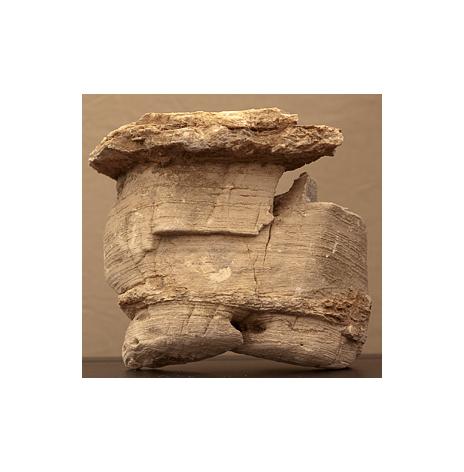 Fossilsten
